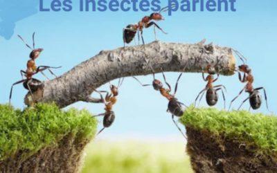 Un insecte fait des douas pour elle